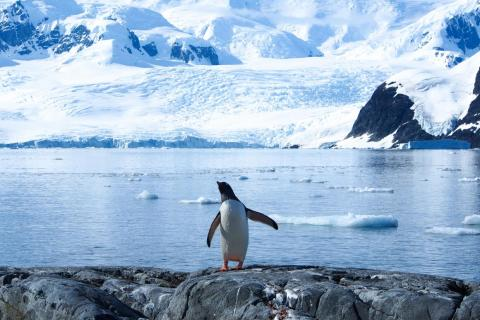 In the 1980s, Antarctica lost 40 billion tons of ice annually. In the last decade, that number jumped to an average of 252 billion tons per year.
