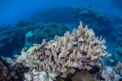 Coral en el mar