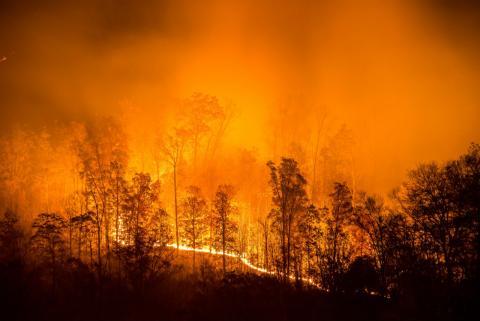 El fuego se extiende en un incendio forestal