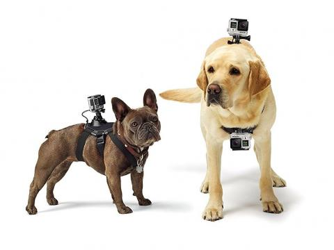 A GoPro harness for pets