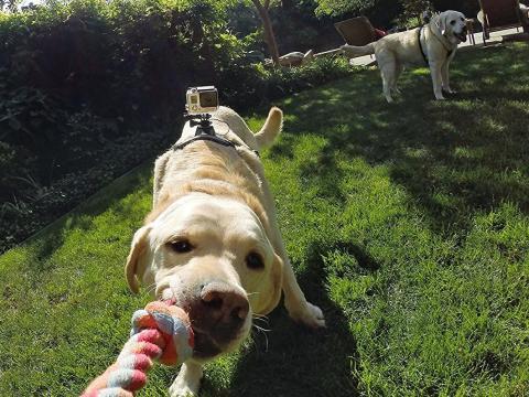 Este arnés permite colocar una GoPro sobre él y permite ver el mundo desde la perspectiva de tu mascota.