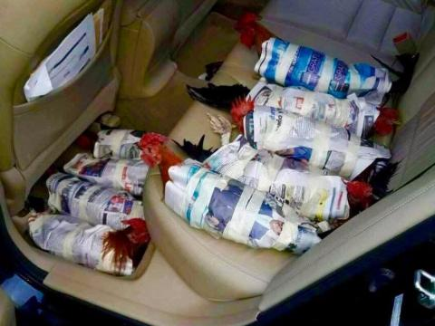 The chickens were wrapped in newspaper while being evacuated.
