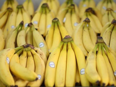 Los plátanos son buenos para los perros y son ricos en fibra.