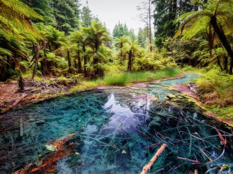 Rotorua, New Zealand is the place to go for peace and alone time.