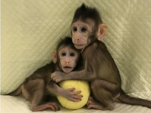 """Chinese scientists announced in January that they'd cloned monkeys, thereby breaking the """"technical barrier"""" for cloning humans."""