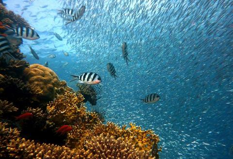 Coral reef bleaching is a big problem for marine life.