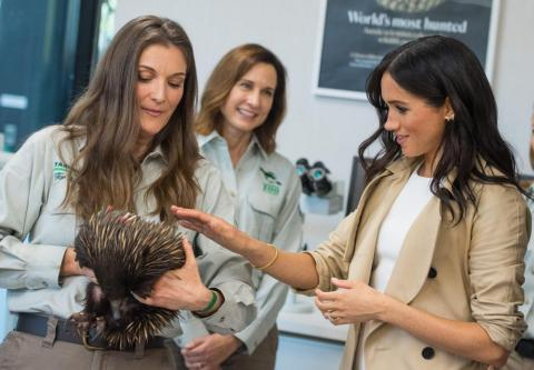 You're forced to put on a brave face when meeting new prickly creatures.
