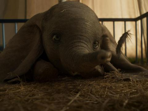 Here's how Dumbo looks on the big screen.