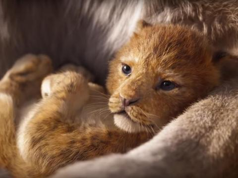 "We're already in love with little Simba. ""Atlanta's"" Donald Glover will voice the adult version of the lion cub."