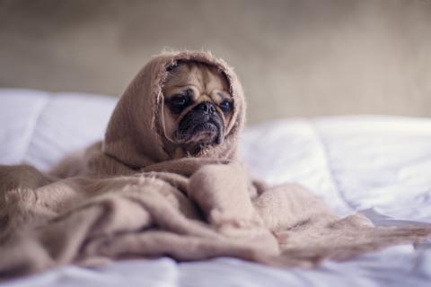 El Blue Monday no es el día más triste del año.