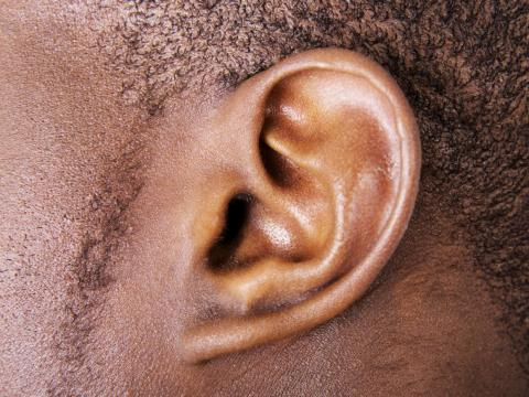 Auricular muscles control the visible part of the ear, but humans have lost the ability to use them. Other mammals use these muscles to detect prey and predators.
