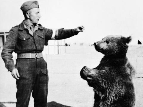 A bear that fought with Poland in World War II was promoted to the rank of a corporal.