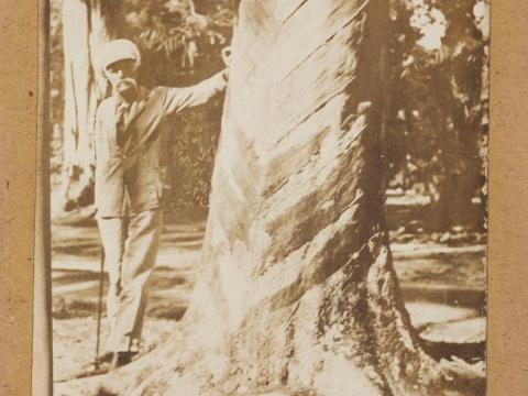 Britain planted the seeds in its Southeast Asian colonies, where the rubber crops, free from the insects that infected them in Brazil, thrived.