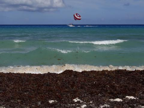 Cancún's beaches are also sometimes plagued with sargassum algae blossoms.