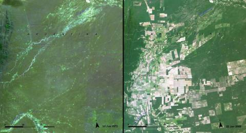 Huge swaths of the Salta Forest in Argentina disappeared from 1972 (left) to 2009 (right).