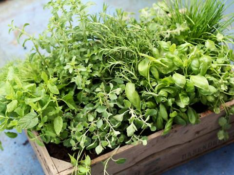 Fresh herbs typically won't be as good after you freeze them.