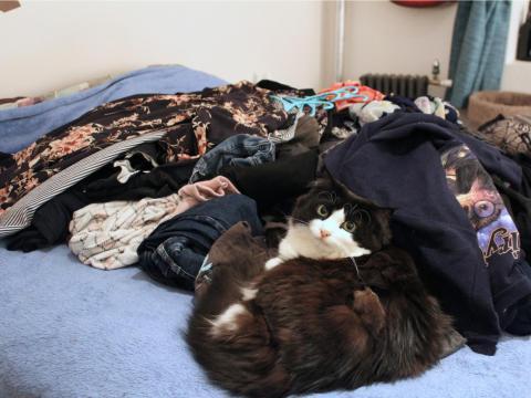 Mi gato posa serenamente en medio de una pila de ropa