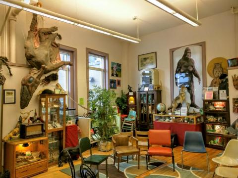 El International Cryptozoology Museum se encuentra en Portland, Maine, Estados Unidos.