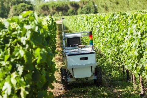 Un robot de Vine Robot.