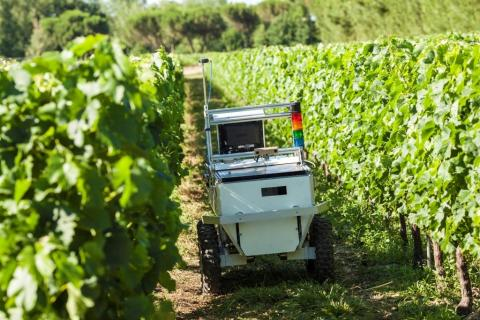 Robot en la cosecha