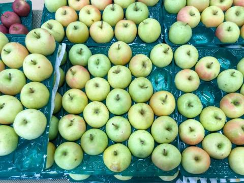 Toki is a hybrid variety of the fruit farmed in Aomori.