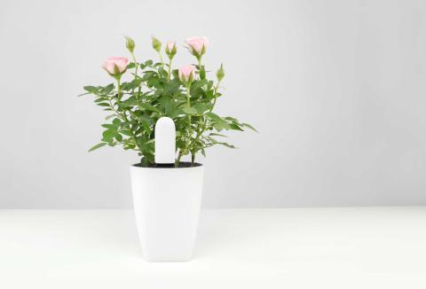 Xiaomi Mi Plant Flower