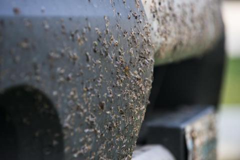 Para 2119, todos los insectos del mundo podrían haber desaparecido.