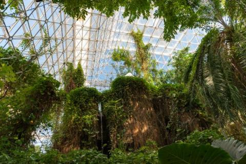 El bioma selva de Biosphere 2