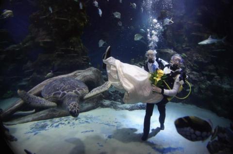 O'Connor y Oliver se casaron dentro de un tanque enorme de peces.