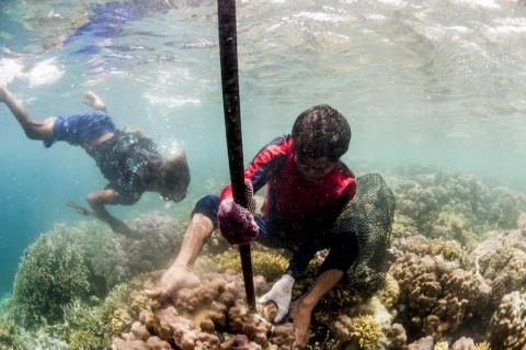 Bajau make a living by selling the grouper and Napoleon wrasse fish to Hong Kong fishing companies.
