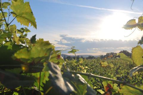 este festival del vino suizo solo se celebra cinco veces cada siglo.
