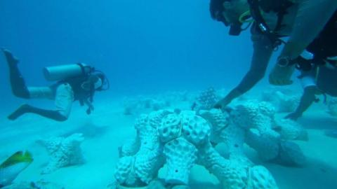 Coral artificial impreso en 3d