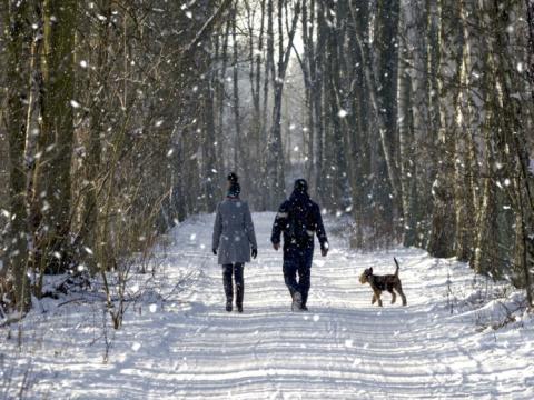 Los paseos habituales durante las horas del día pueden ayudar a combatir el trastorno afectivo estacional.
