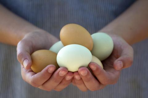 Huevos manos