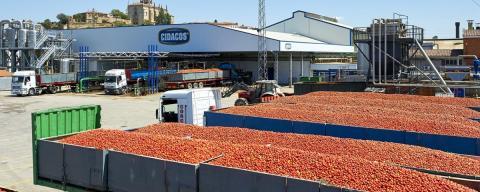 Tomates Cidacos