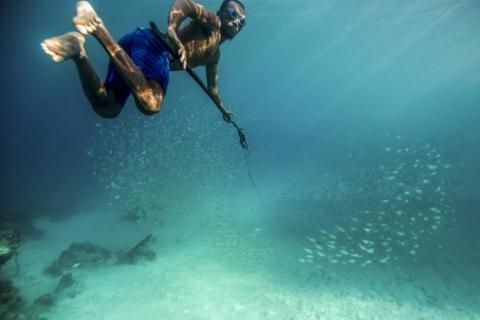 Traditionally hunter-gatherers, the Bajau have provided for themselves primarily by spearfishing. They are highly skilled free divers, swimming to depths up to 100 feet to hunt for grouper, pearls, and sea cucumbers.