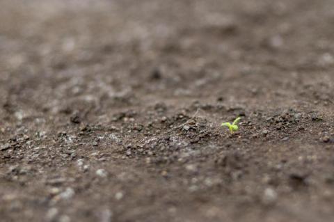 una planta creciendo en la tierra en Biosphere 2