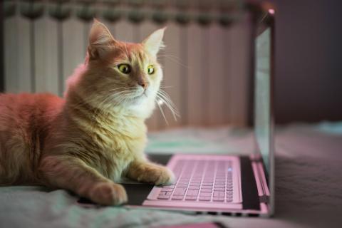 Un gato junto a un ordenador.