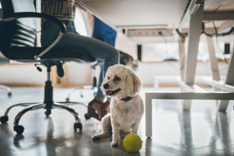 Un perro debajo de una mesa de trabajo.