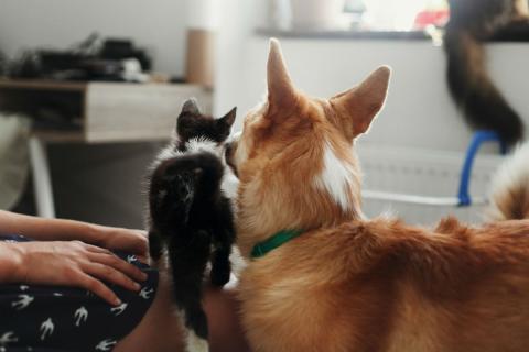 Un perro y un gato.
