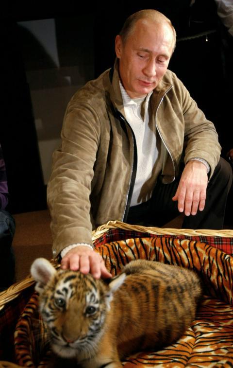 Vladimir Putin acaricia a una cría de tigre.