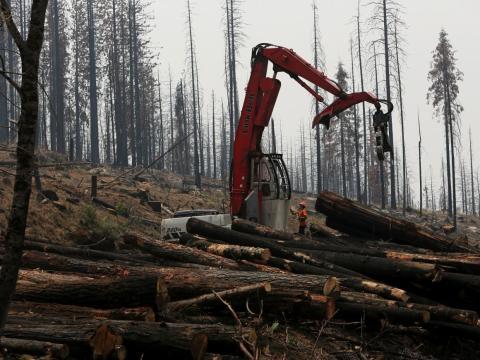 An active logging site near Groveland, California.