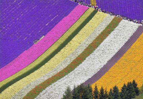 And Farm Tomita is home to 13 different flower gardens.