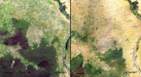 The Baban Rafi Forest in Niger also shrank from 1976 (left) to 2007 (right).