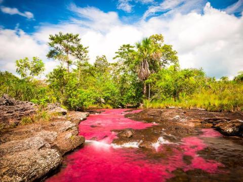 Río Caño Cristales, Colombia