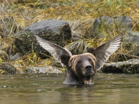 A conveniently placed bird makes it seem like this bear is about to take flight.