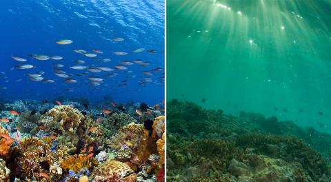 The effects of human impacts aren't limited to the land. Ocean environments and coral reefs have been negatively affected, too. Higher ocean temperatures cause corals to expel the algae living in their tissues and turn white —