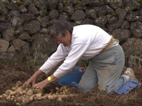 The farming part of life in Tristan allows islanders to grow their own food without having to import.