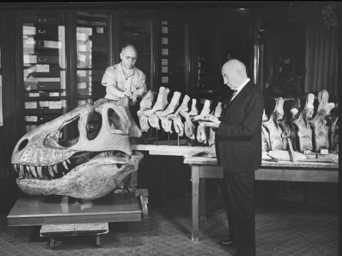 The first T. rex skeleton was discovered in 1902 by Barnum Brown, a paleontologist with the AMNH.
