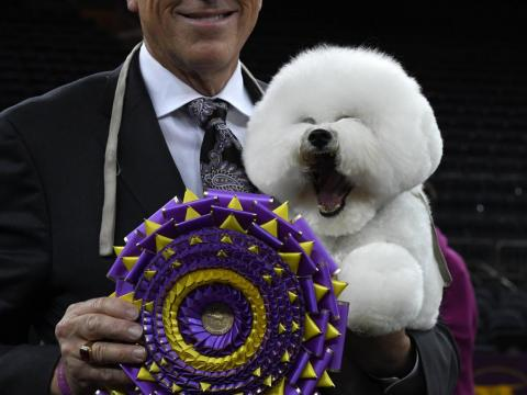 Flynn is more excited than his owner to win the Westminster Dog Show.